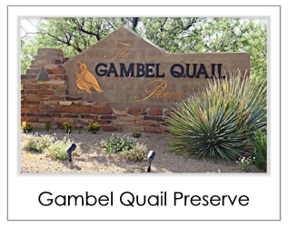 Gambel Quail Preserve Homes For Sale in Desert Mountain Scottsdale AZ