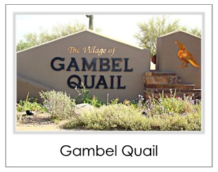 Gambel Quail Homes For Sale in Desert Mountain Scottsdale AZ