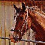 Horseback Riding and Camping at The Ranch